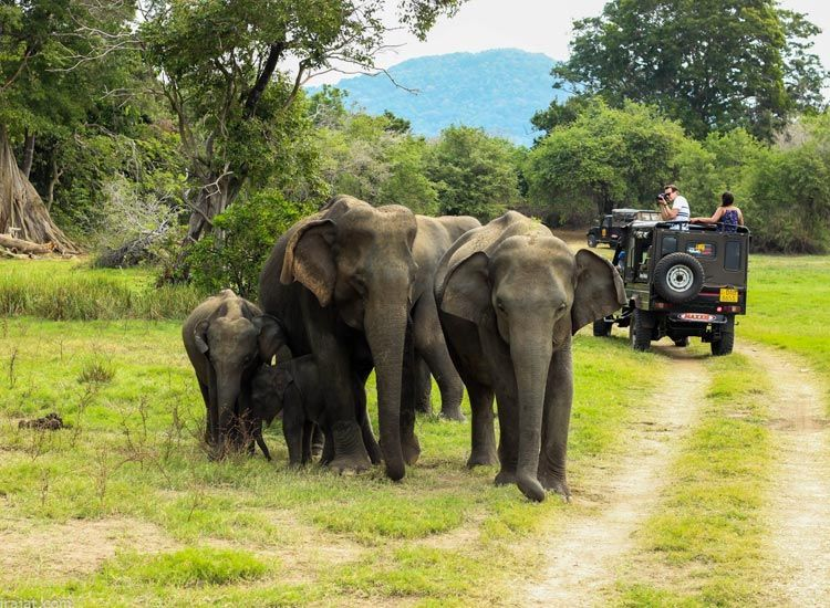 Jungle Safari in Periyar, Kerala
