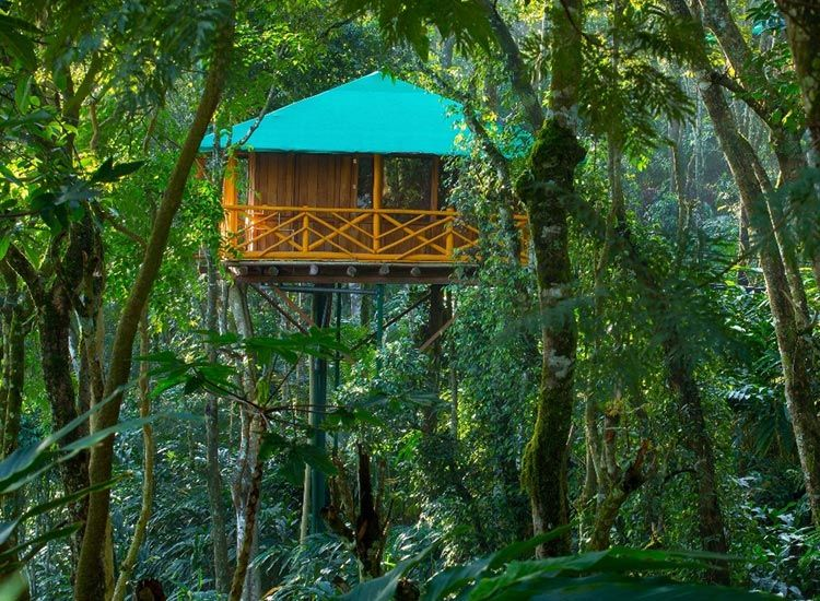 Best Tree houses in Kerala