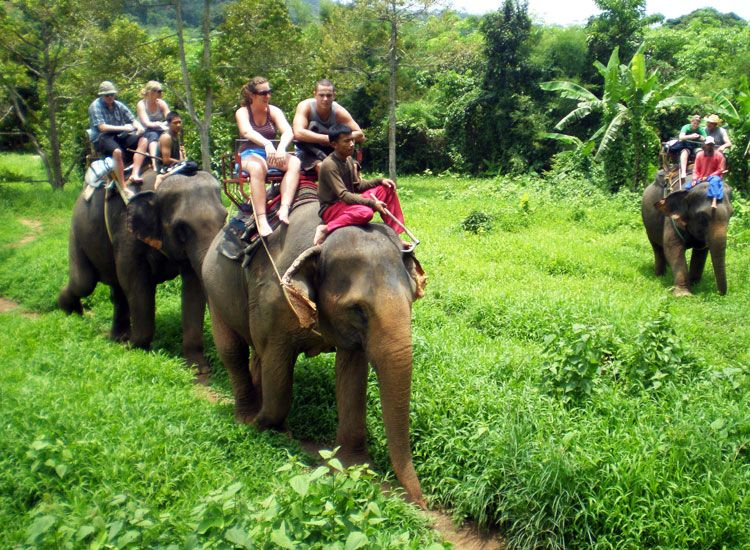 Elephant Safari in Kerala