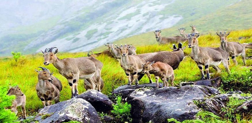 Explore the famous Wildlife-Sanctuaries