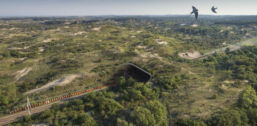 Wildlife Crossings: India to Get 'Animal Bridges' on Delhi-Mumbai Highway