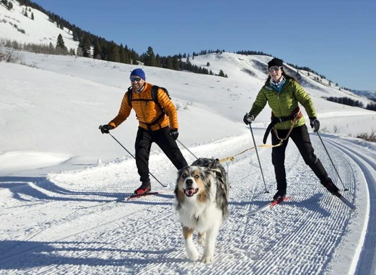 Enjoy the thrilling Skijoring