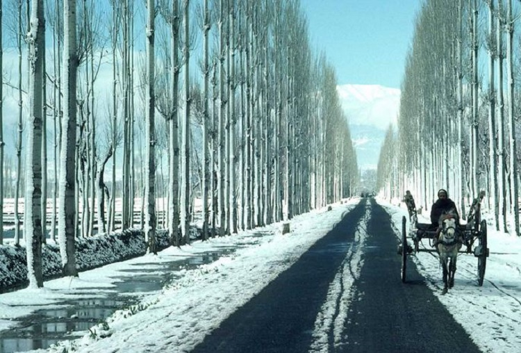 Winter Road Trips in India You Should Take Once in a Lifetime