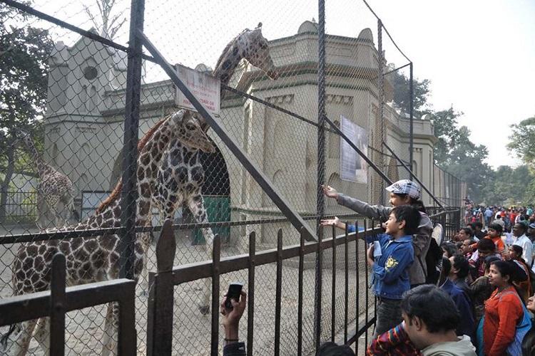 Alipore Zoo, Kolkata