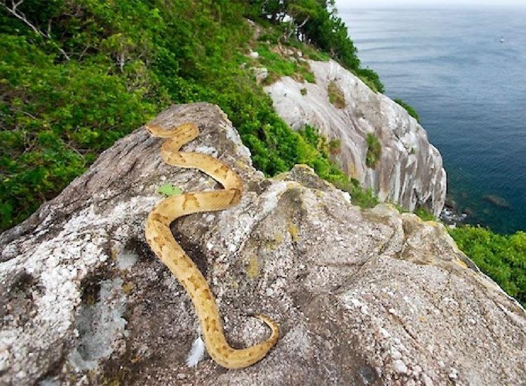The Scary Snake Island, Brazil