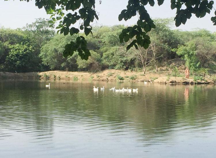 10 Best Picnic Spots in Delhi to Relive Childhood Memories
