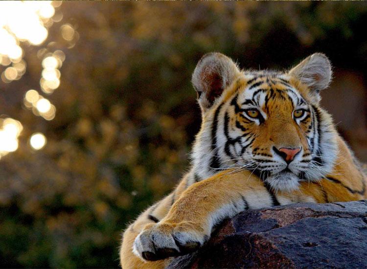 Zoological Park in Delhi