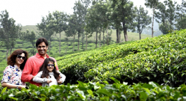 tea garden in munnar in june