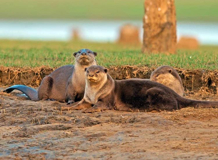 Cauvery Wildlife Sanctuary