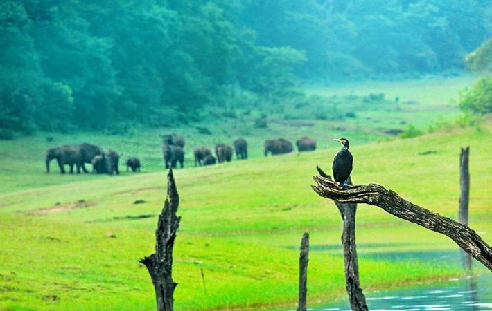places-to-visit-near-chennai-thekkady