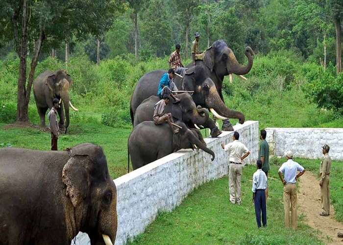 Dubare-Elephant-Camp-coorg-places-to-visit-near-chennai-in-may