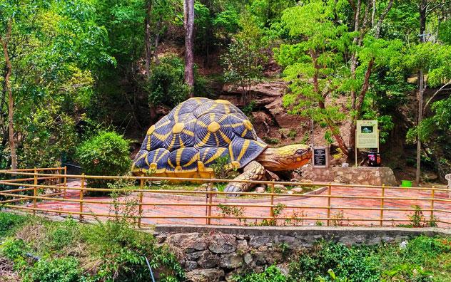 one-day-trip-munnar-chinnar-wildlife-sanctuary