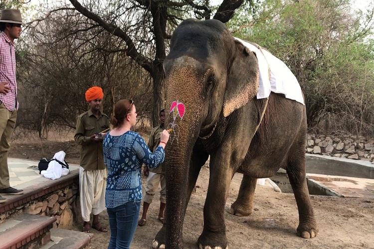 Meet with an Elephant in Jaipur (Dera Amer)