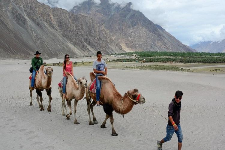 Ride a Camel in Nubra Valley