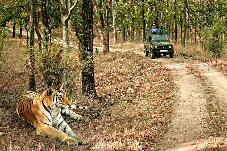 Answer the Call of the Wild in Bandhavgarh
