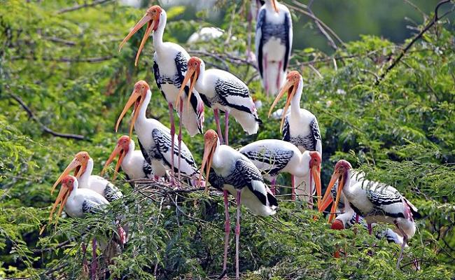 family trip Bharatpur near delhi