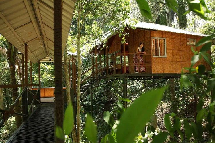Coffee- County Resort in Wayanad
