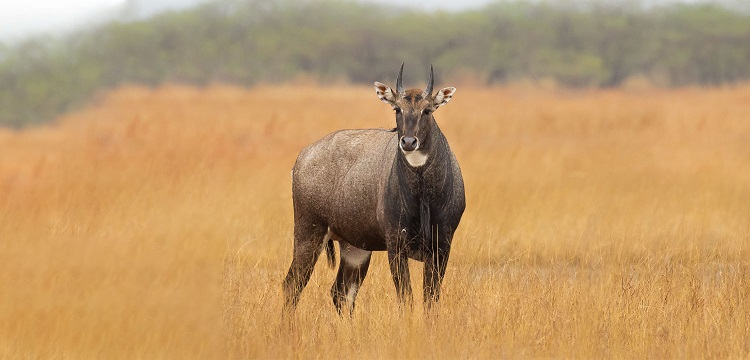 Jambughoda-Wildlife-Sanctuary