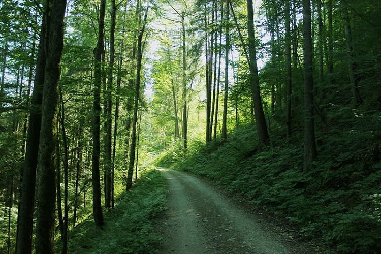 kiala-forest