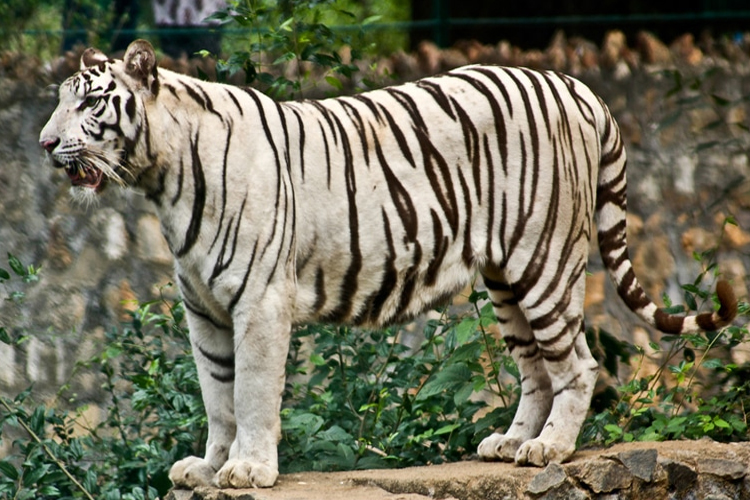 places-to-visit-near-chennai-within-300-Arignar-Anna-Zoological-Park